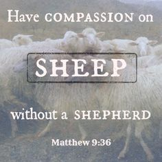 compassion for sheep without a shepherd matthew 9:36 lutheran indian ministries