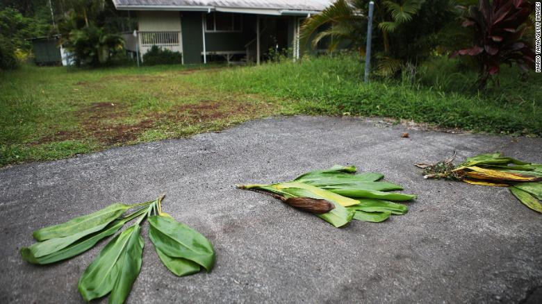 180508100216-hawaii-volcano-pele-leaves-exlarge-169.jpg Ti leaves are left in front of a home located near a lava flow in the Leilani Estates neighborhood on Monday. The leaves are an offering to Pele, the Hawaiian volcano goddess. lutheran indian ministries native news