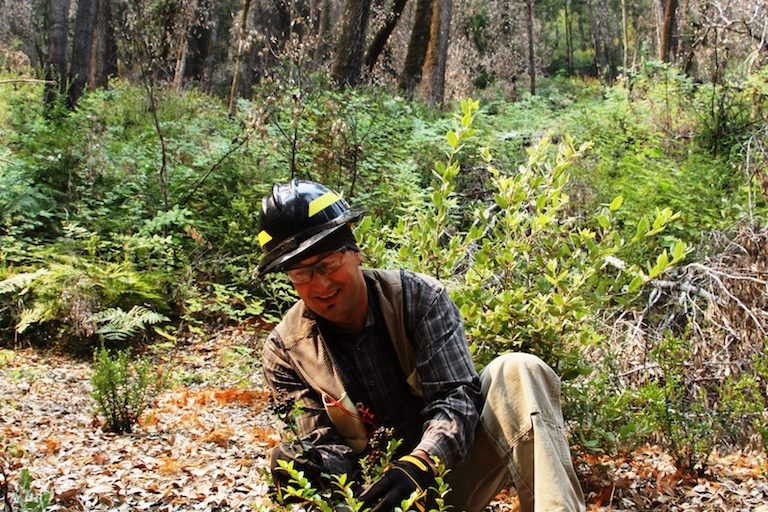 Frank Lake, a PhD research ecologist with the U.S. Forest Service and a Karuk descendant, at the start of huckleberry season. Image by Jane Braxton Little for Mongabay