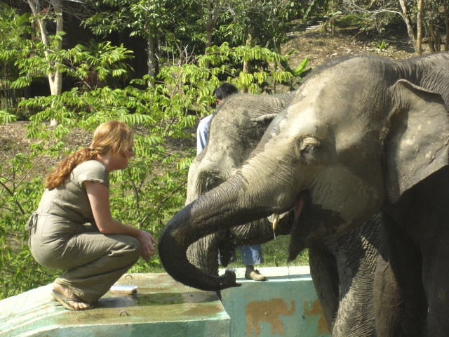 making friends at an elephant sanctuary | Sukhothai, Thailand