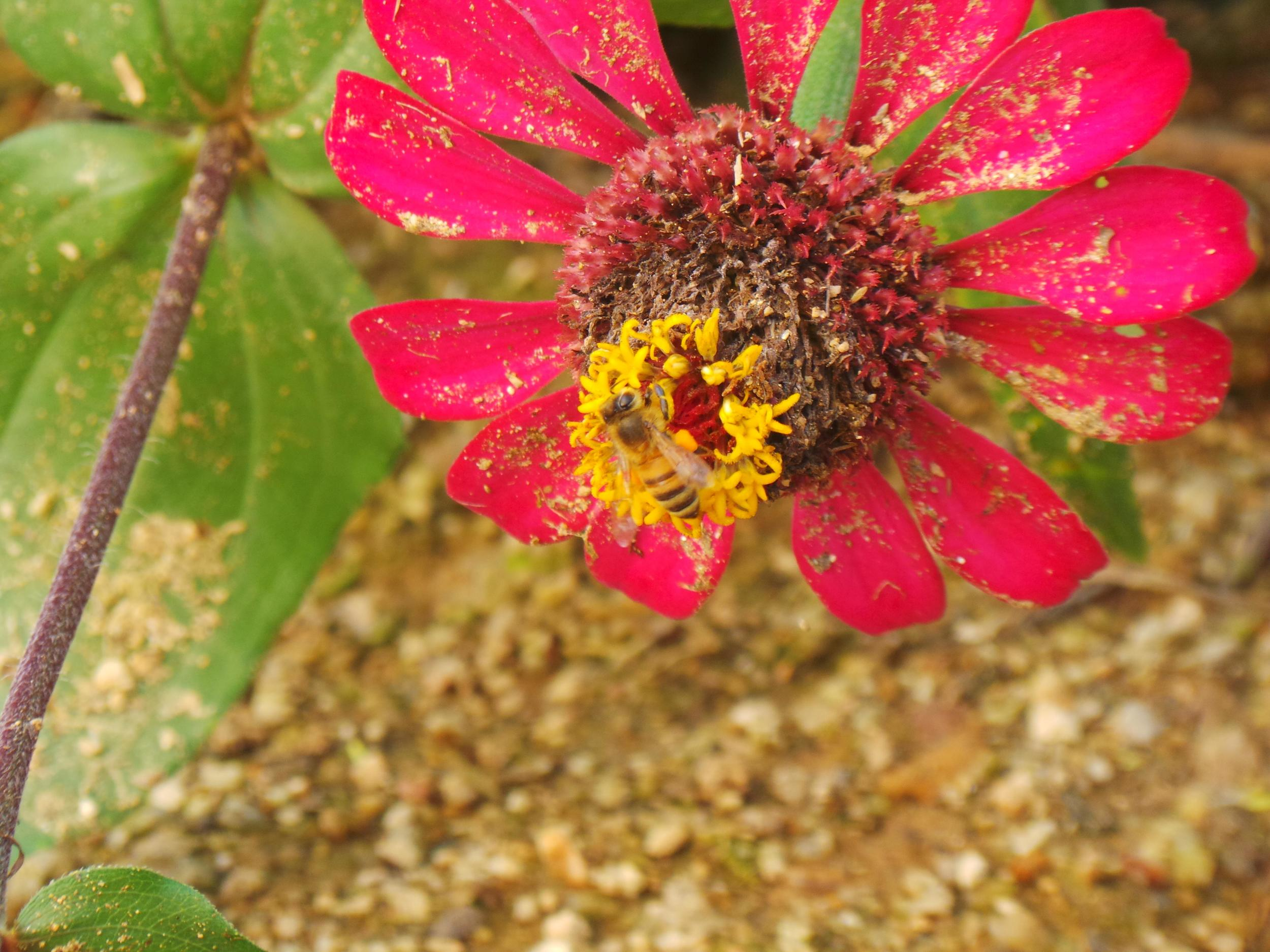 We NEED Bees...Help Them Help Us — Living Expression Landscapes