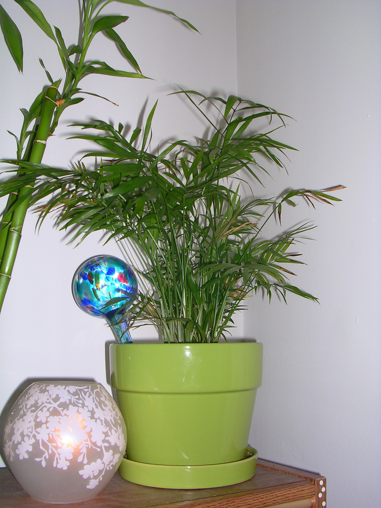 aqua globe, day one - palm by  Maggie not Margaret/CC BY