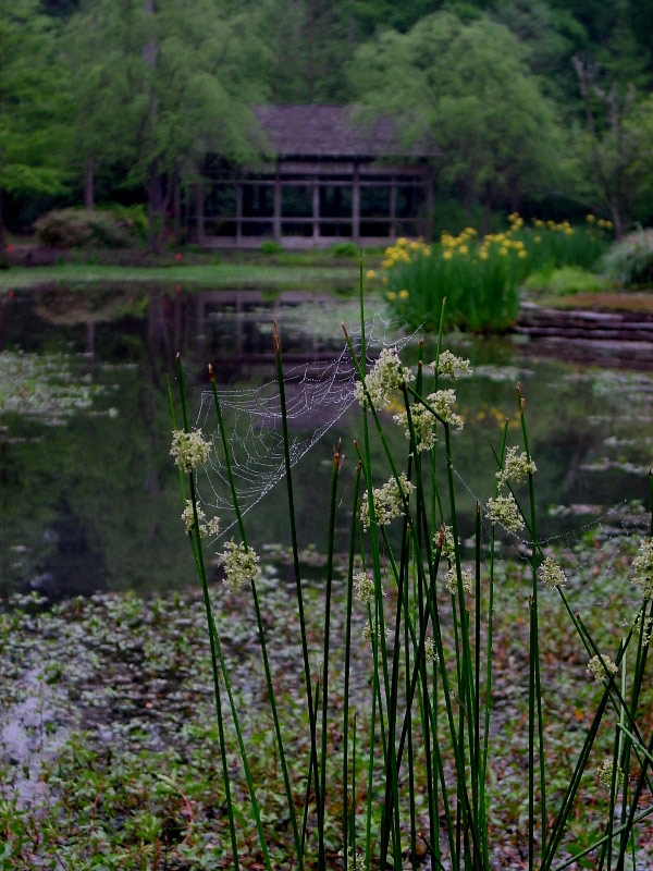 mercer_arboretum_pond_original.jpg
