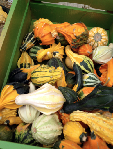 Gourds in a variety of colors and shapes are fall festive!