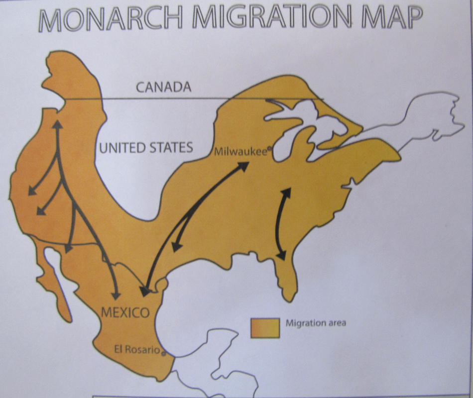 monarch butterfly migration routes by Damon Taylor/CC BY