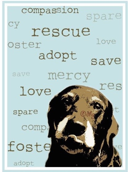 Unconditional love is as close as your nearest shelter.    Recycle Life.....adopt