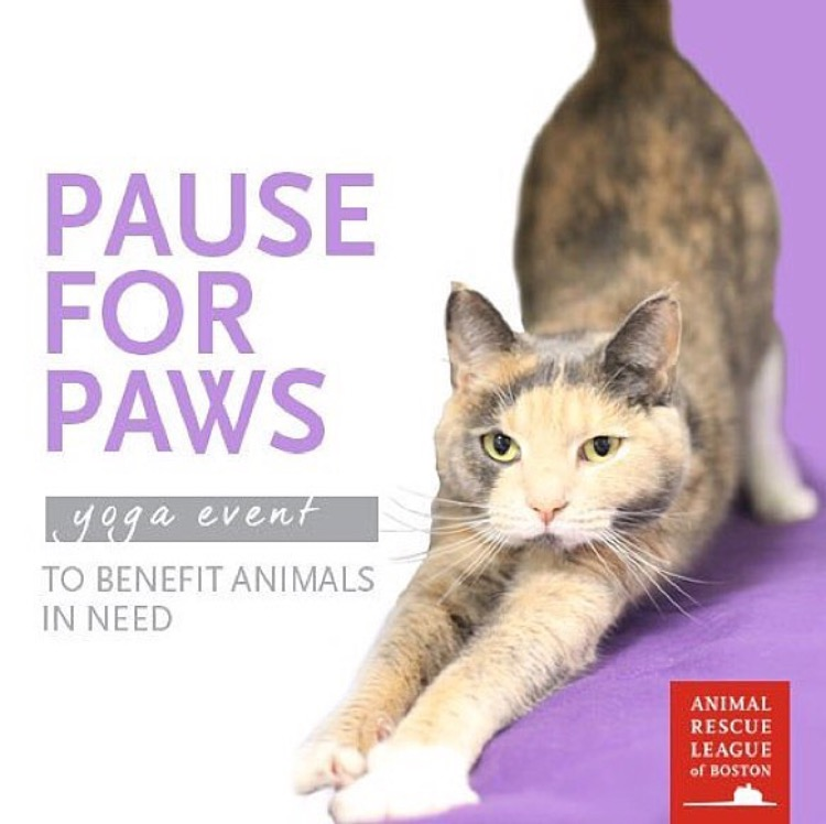 Pause for Paws: Flow for the Animal Rescue League — Wander
