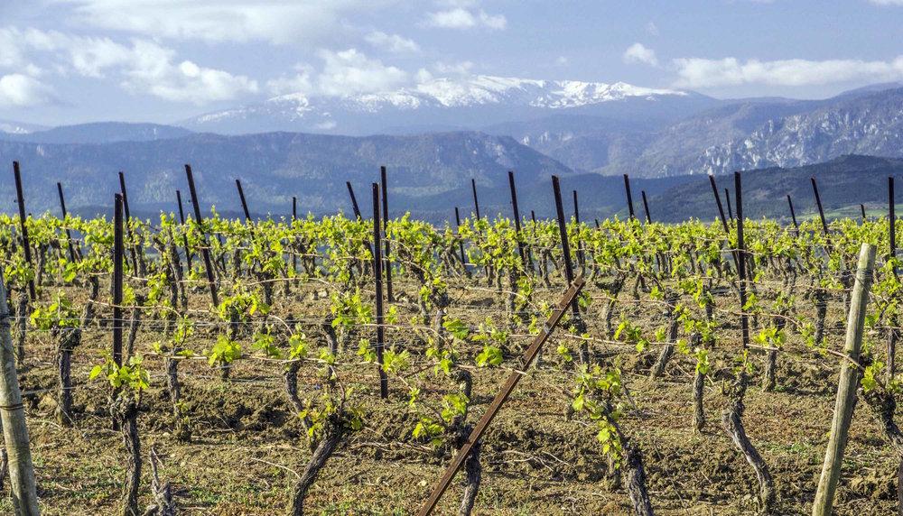 Surrunding Vineyards.jpg