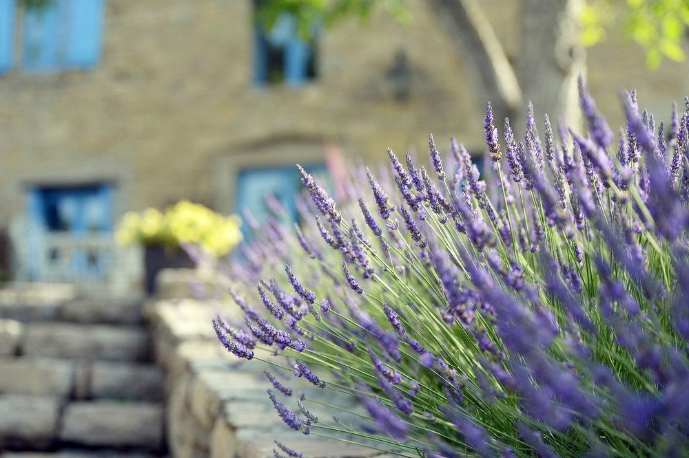 Lavender France Yoga Retreat