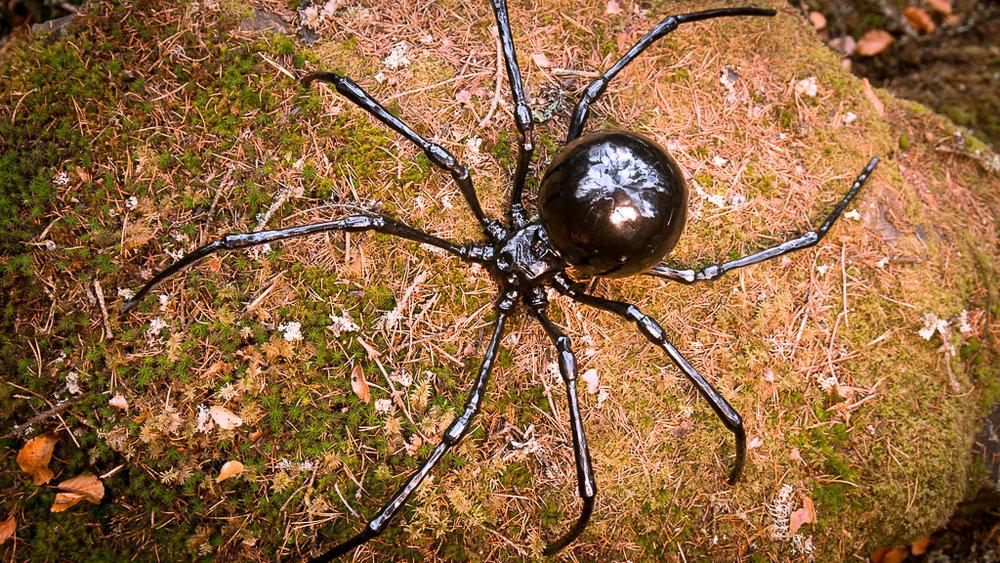 20181102_1_spider.jpg