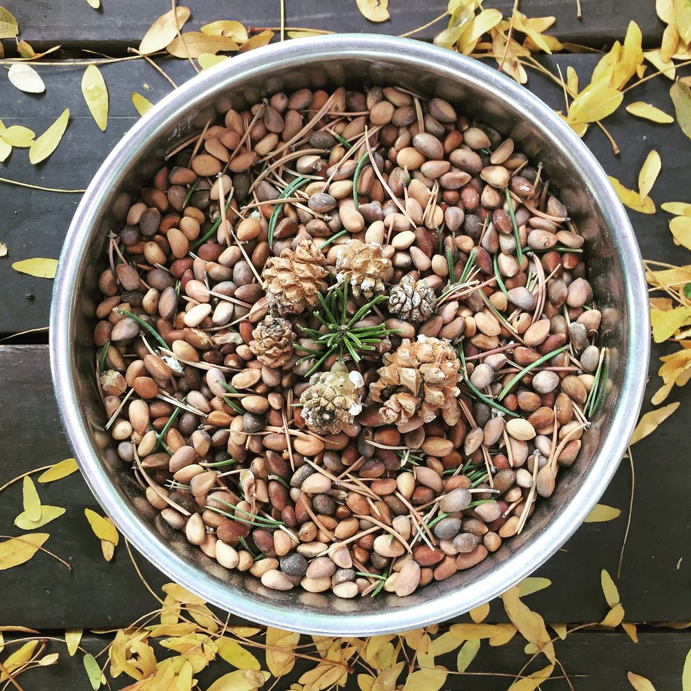 Foraged Pine Nuts.