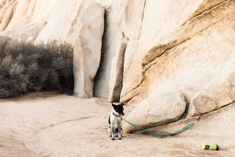 climbing in joshua tree national park | utah and california adventure elopement photographers | the hearnes adventure photography | www.thehearnes.com