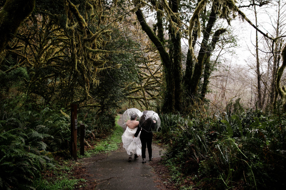 wedding portraits in the redwoods