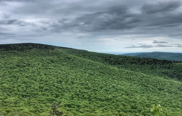 Blackhead Range (Blackhead Peak, Thomas Cole Peak, Black Dome) - Greene, NY   Via Red (Black Dome Trail) to Yellow Batavia Kill Trail w/ Blue  Completed: 06/23/18