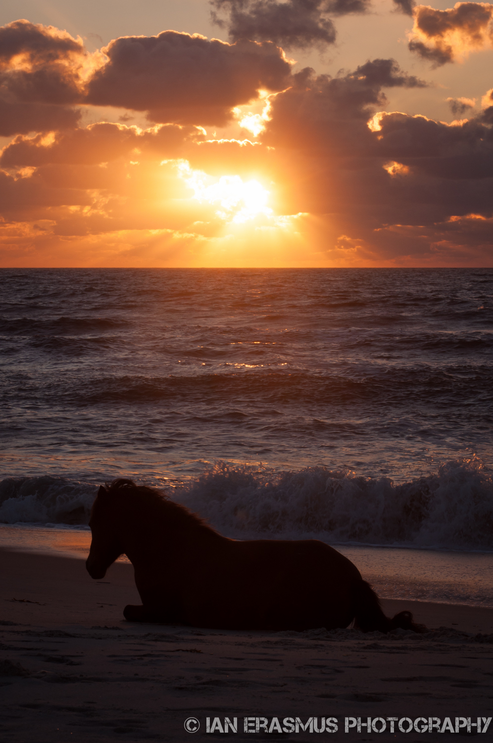 There were two horses down at the beach, and they both just stood there, staring out towards the horizon, never moving except to lie down. Then, once the sun was up, the bolted, and playfully ran off down the beach. Horses are weird.