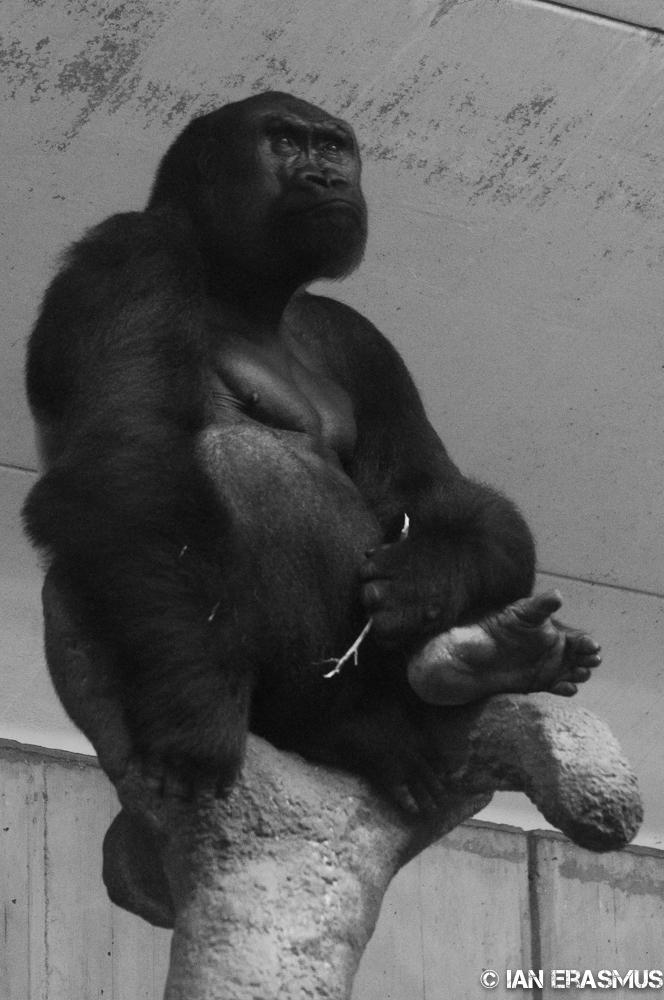 Zoo-3.jpg
