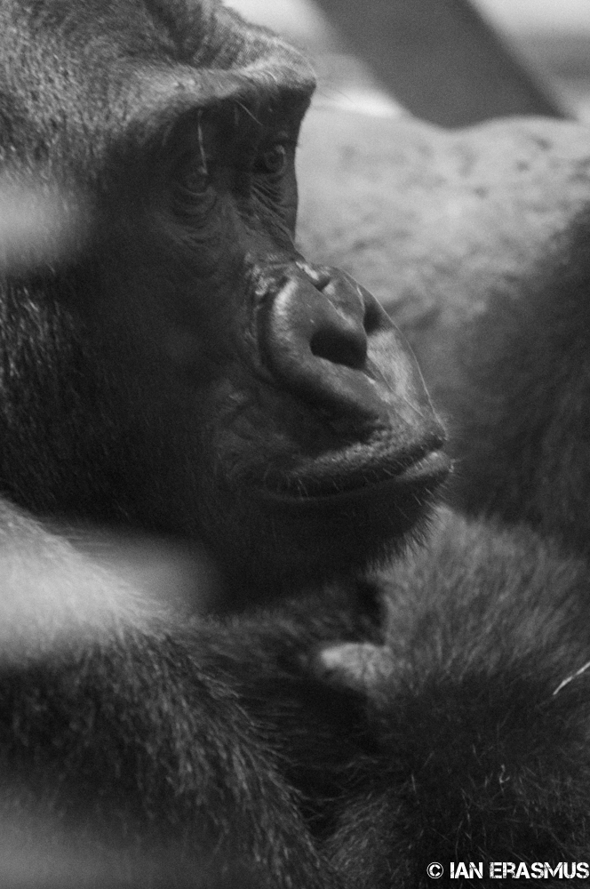 Zoo-4.jpg