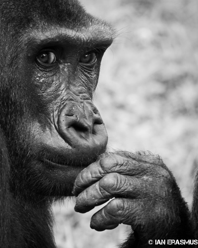 Zoo-6.jpg