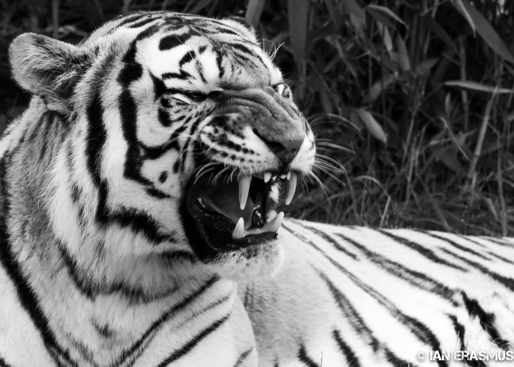 Zoo-21.jpg