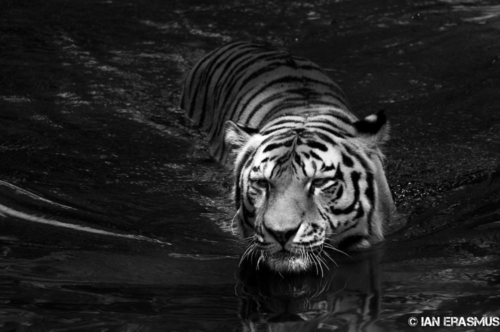 Zoo-23.jpg