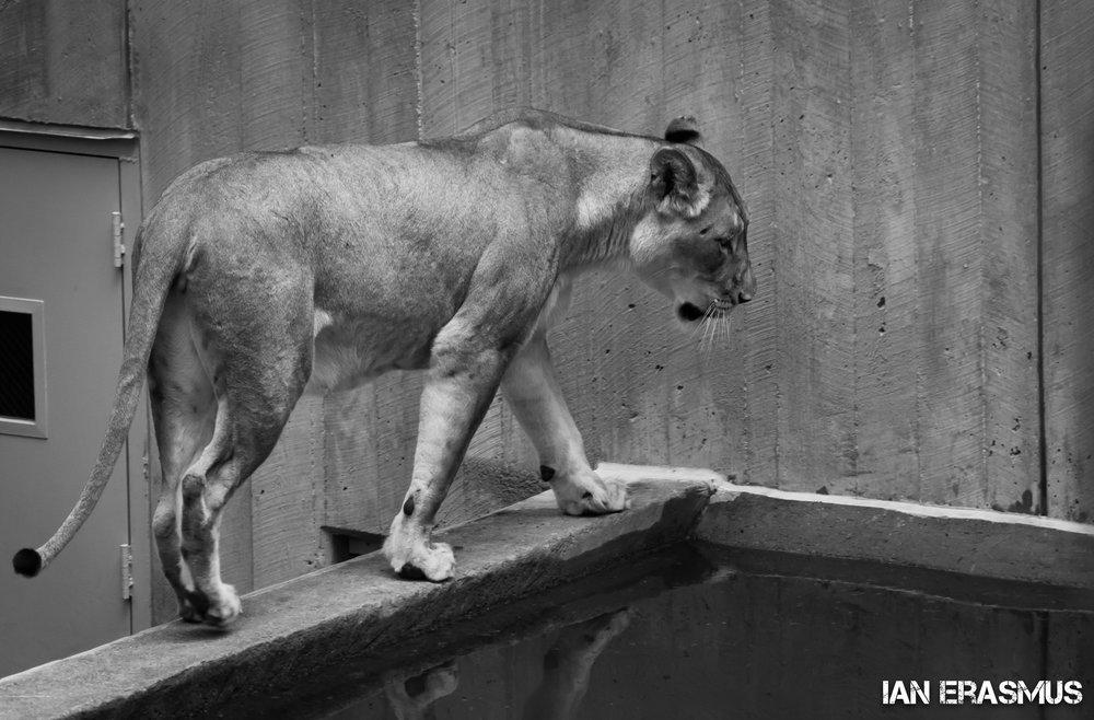 Animals-9.jpg
