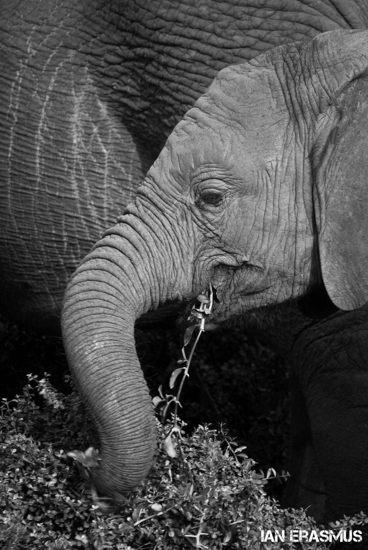 Animals-11.jpg