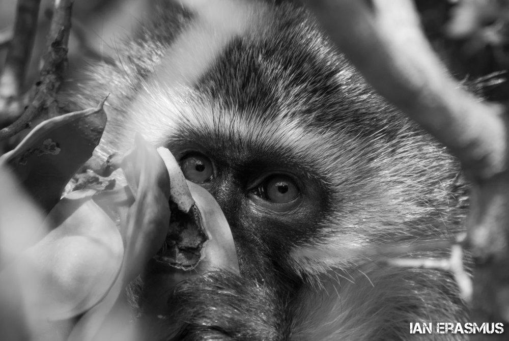 Animals-12.jpg