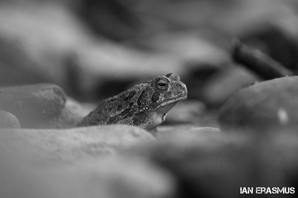 Animals-48.jpg