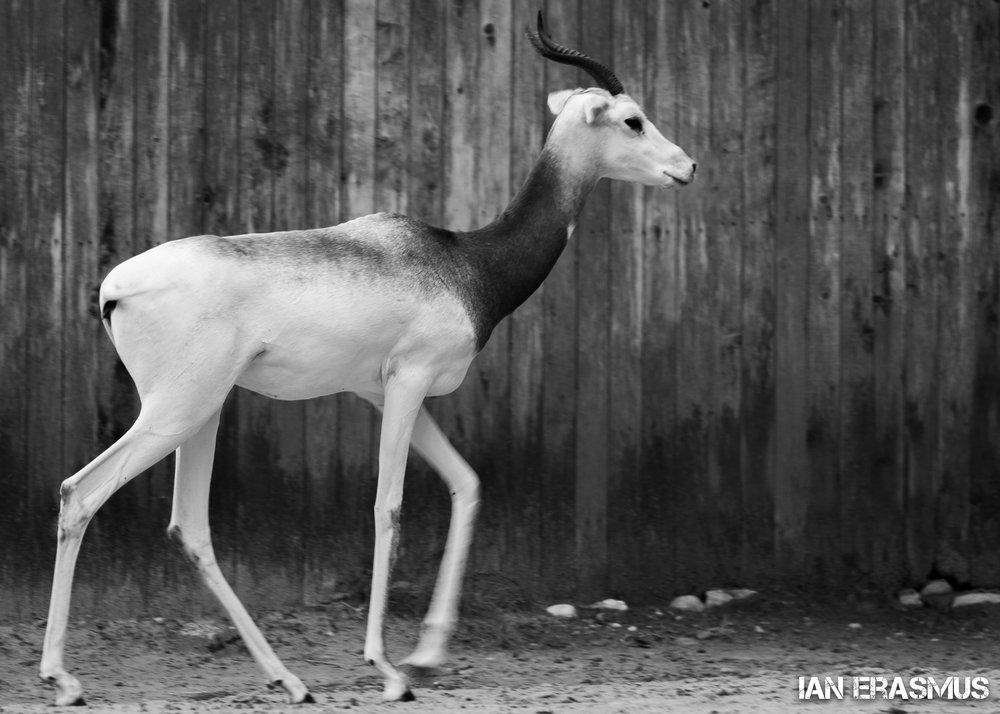 Animals-54.jpg
