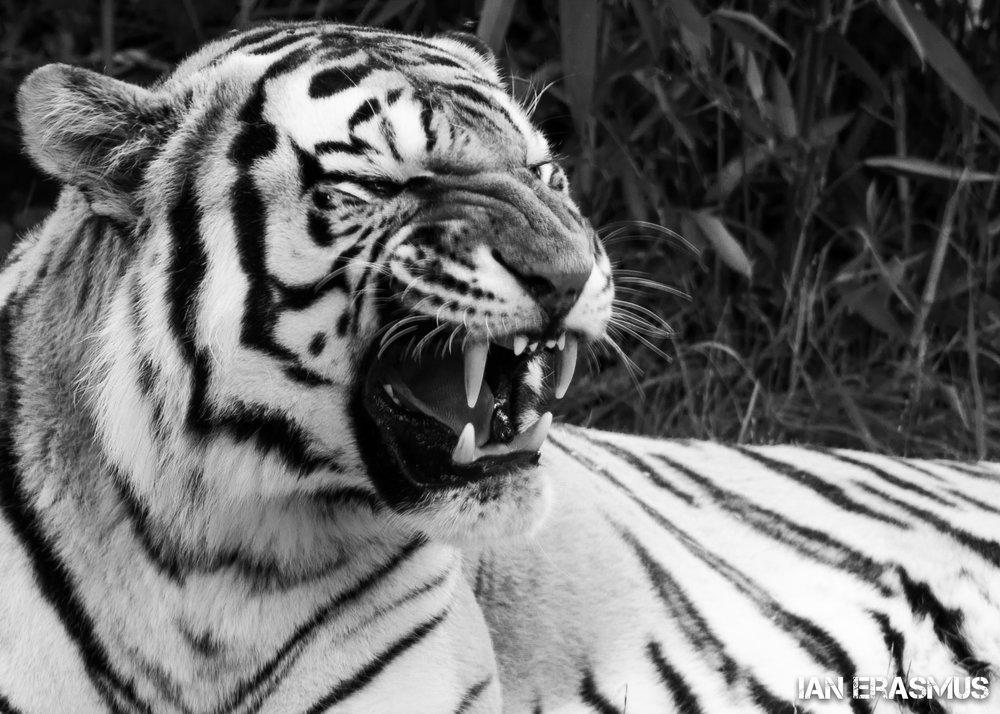 Animals-57.jpg