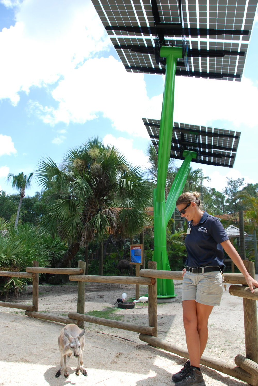 Spotlight Solar tree kangaroo Lift 2.JPG