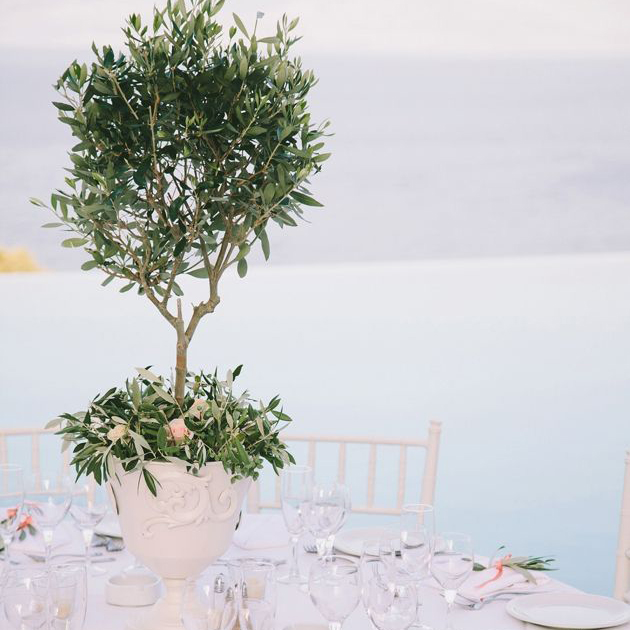 Our wedding reception centerpieces were of course, mini olive trees.