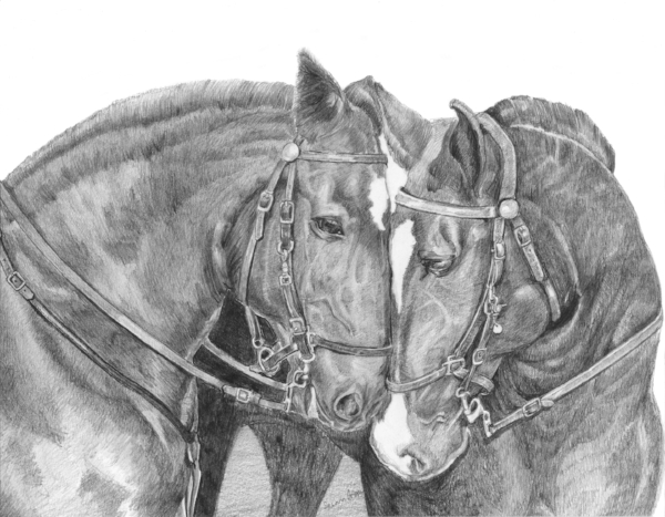 """Jack & Mandy"" 11x14 Graphite on Bristol Smooth, Framed.  $325 SOLD  Are Percherons and are Cleveland Mounted Police horses in Cleveland Ohio."
