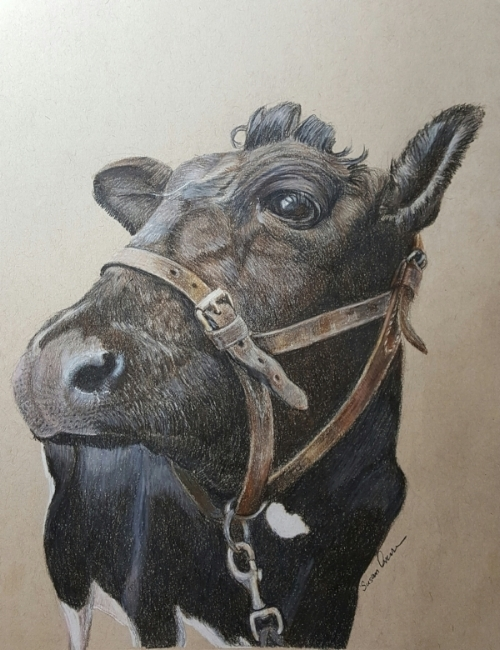 """Moo Cow"" colored pencil 7x 10 matted, framed $175 available  Resident at the Cleveland Metropark, Farm Park Milking Exhibit, waiting her turn to go up the milking ramp and surveying the 20 eager 6 year old milkers on a field trip lined up and ready for a hands on experience."