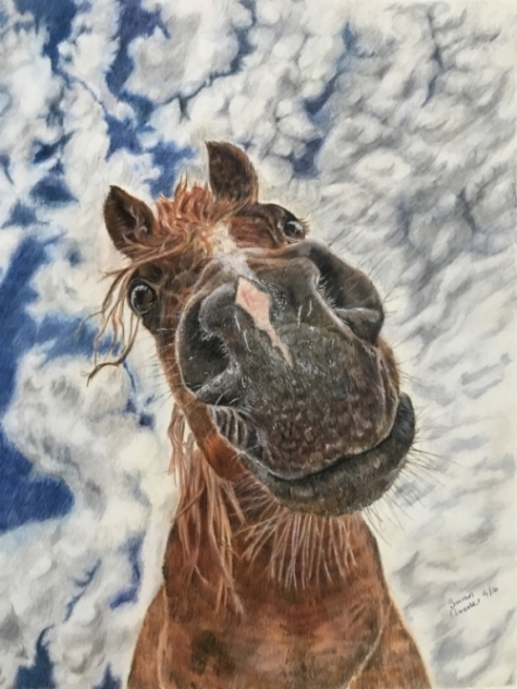 """Jake""  Colored Pencil on Stonehenge 11x14  Framed.   SOLD $325  Backstory: Jake's 'mom' lay on the floor of her stall, feeding him sugar cubes to get the photo this came from!"