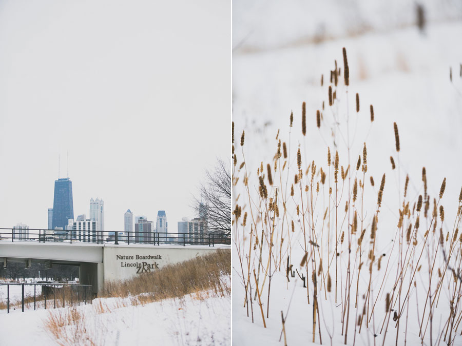 winter-chicago-proposal-002