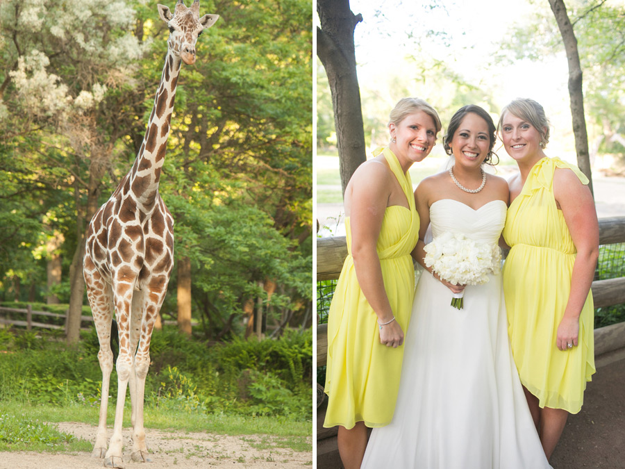 brookfield-zoo-wedding-046