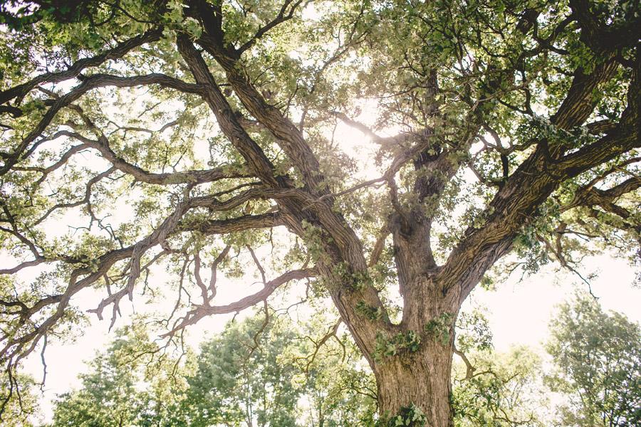county-line-orchard-wedding-0031