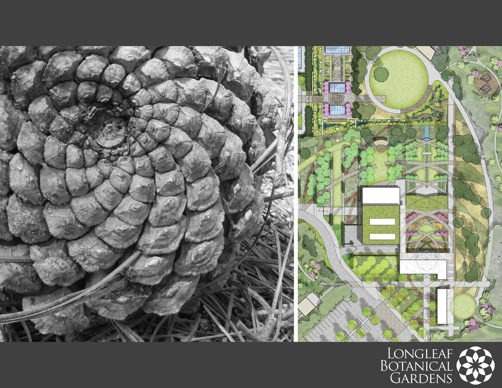 CARBO Landscape - Longleaf Botanical Garden_Page_01.jpg