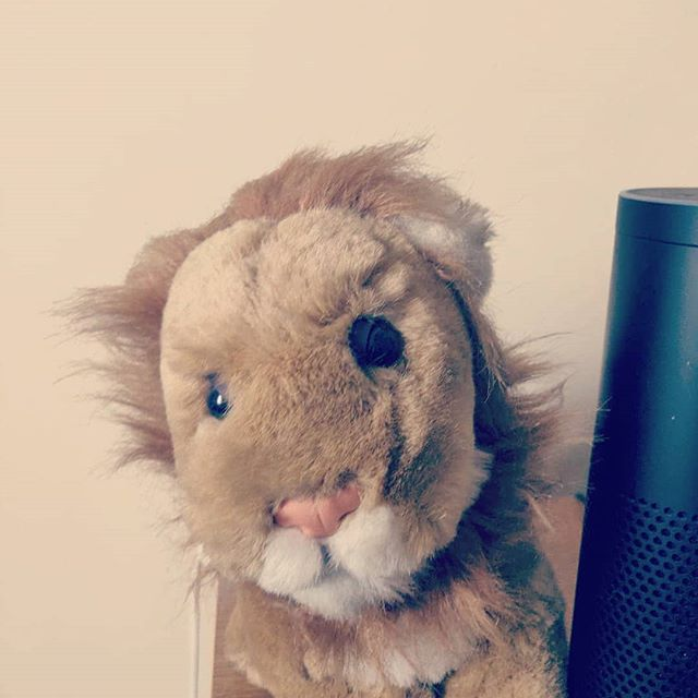 "My sister gave me this Lion when I was 10 years old he is more then 20 years old now, I call him Leo. Know he looks a bit ruggy but I am a bit sentimental.  She gave this me because of my star sign Leo.  I have always felt connected to Cats and it seems fitting because I feel they are my power animal. Plus my cat Flower is literally the most calming animal for me ever and she gives me strength.  So recently when I saw the movie Lion. It reminded me of a few things. Apart from me crying pretty much all through the second part 😪. It reminded me of where my family are from Calcutta or as it's known now Kolkata.  I was lucky enough to have known both my parents and be with them and be loved by them. I didn't miss out too much. Yes my dad died many years ago but at least I remember him.  There are so many beautiful children in the world who need homes, love and someone to look out for them. So many children have no one. I mum would always say to be in Bengali. ""Someone who has no mum has no one"". So many children go missing all over the world and they have to survive. Just like this boy did in the movie. The strange part is this is a true story so it was more heart breaking to watch knowing this.  It made me appreciate my mum and my family even more. Some people's birth parents aren't loving and kind so they find their ""version"" of a family. Unconditional love is one of the most powerful things we have in this world.  Remember we all deserve love and to be wanted.  Would love to know what you think about this?"
