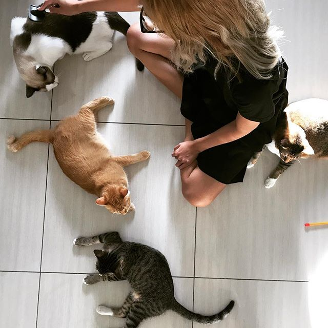 Loveee meeeee! #catlady #catsofinstagram #cat
