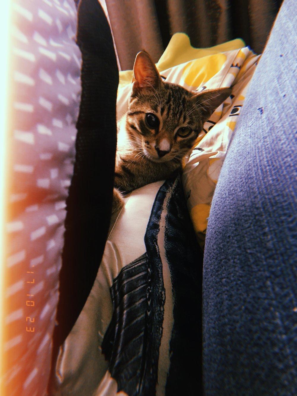 porterthecrazycat