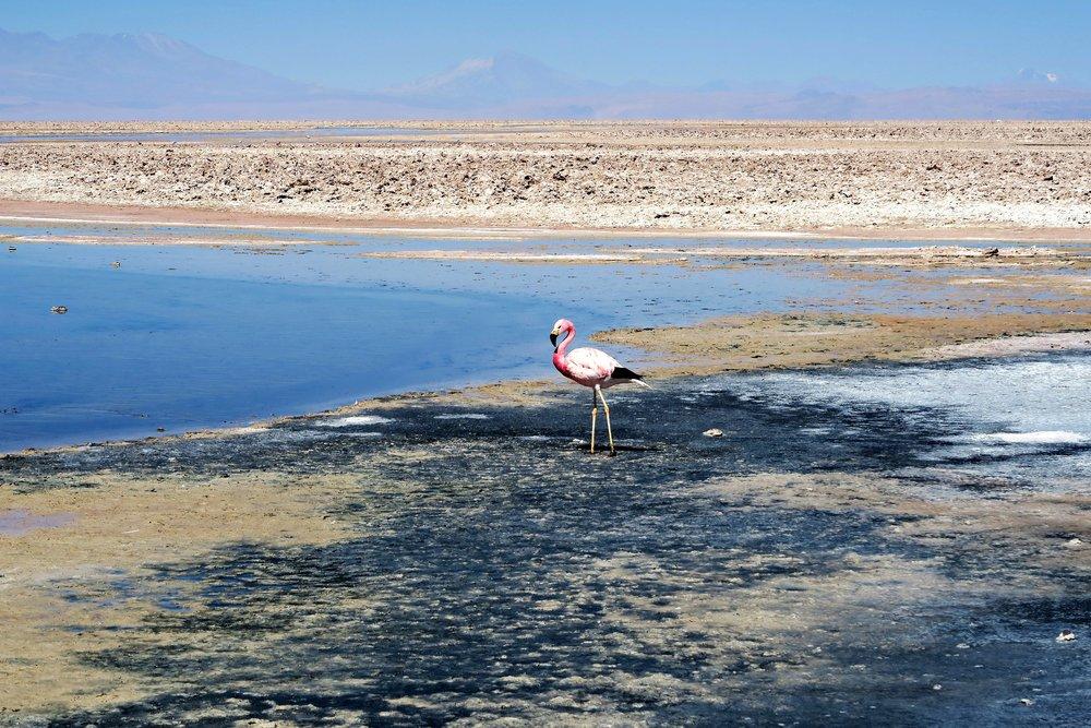 Los Flamencos National Reserve - Salar de Atacama - Sector Laguna Chaxa - San Pedro de Atacama - Atacama Desert - Tip Top Planning