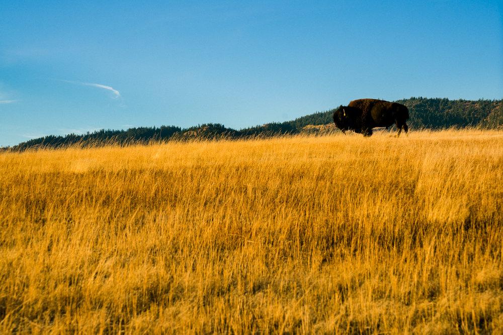 97 Ridge Hike (SM)-00956.jpg