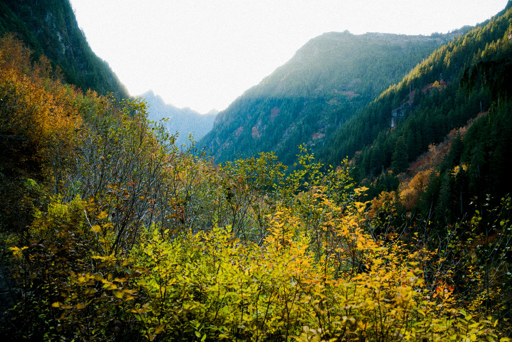 Mt Forgotten Meadows Fall (SM)-01844.jpg