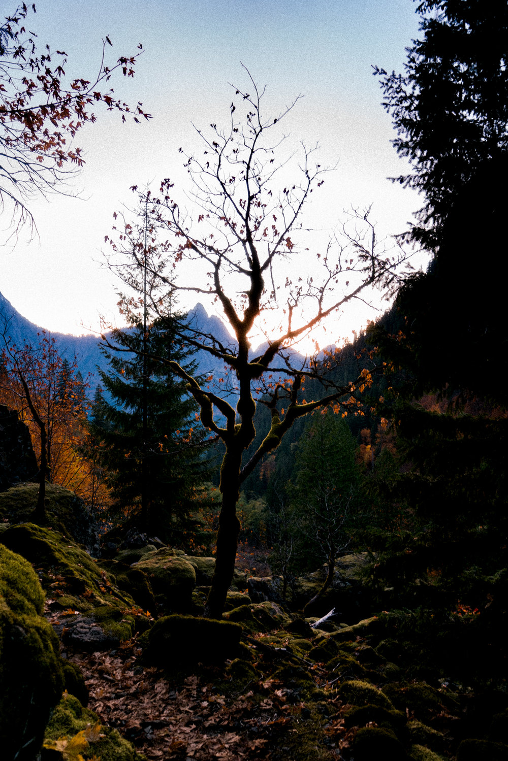 Mt Forgotten Meadows Fall (SM)-01899.jpg