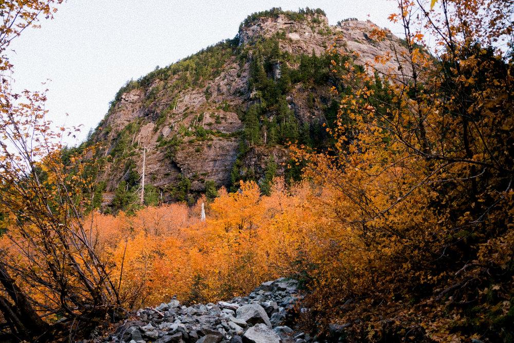 Mt Forgotten Meadows Fall (SM)-01892.jpg