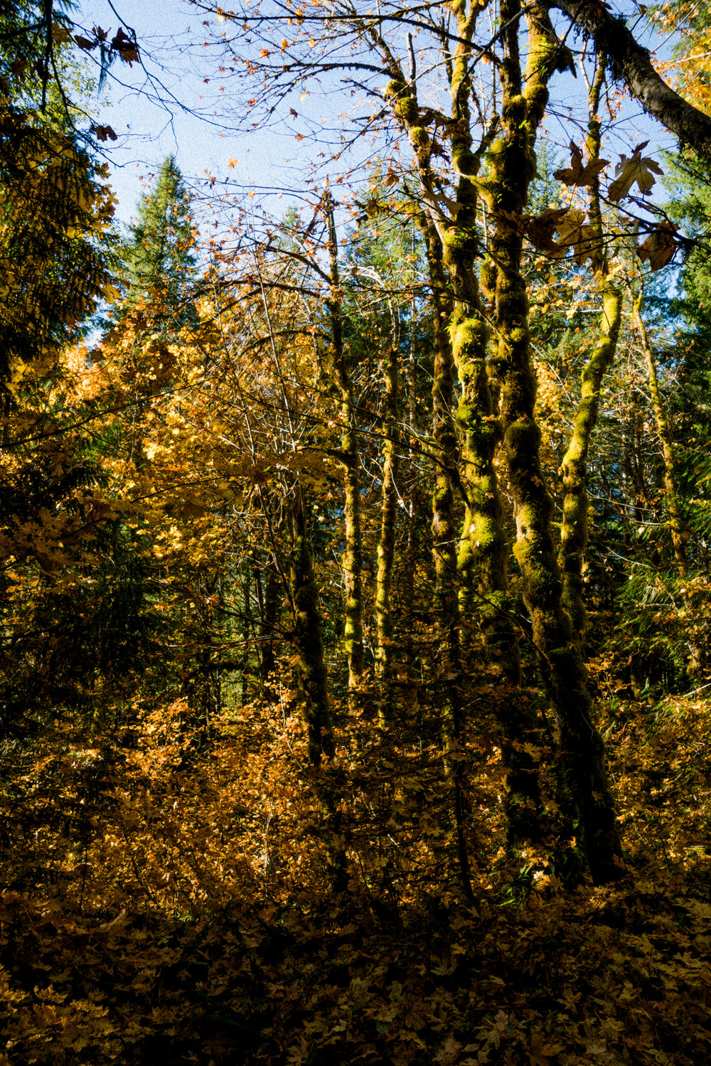 Mt Forgotten Meadows Fall (SM)-01689.jpg