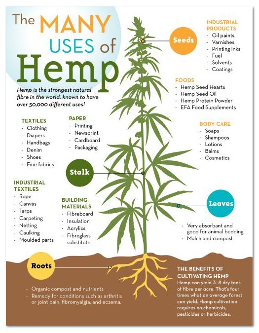 Hemp infographic.jpg