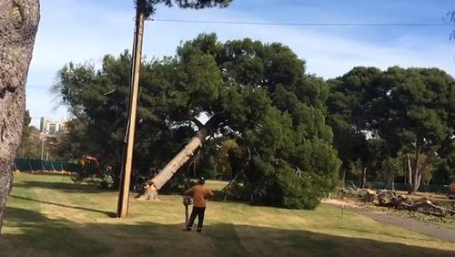 tree+felling1.jpg